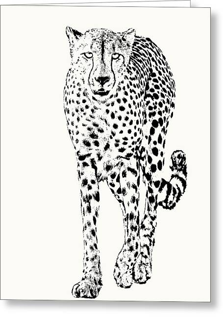 Cheetah Full Figure, Front-on View Greeting Card
