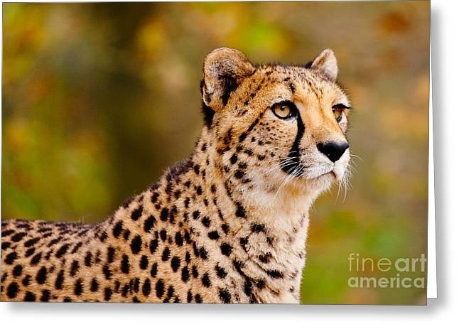 Cheetah In A Forest Greeting Card