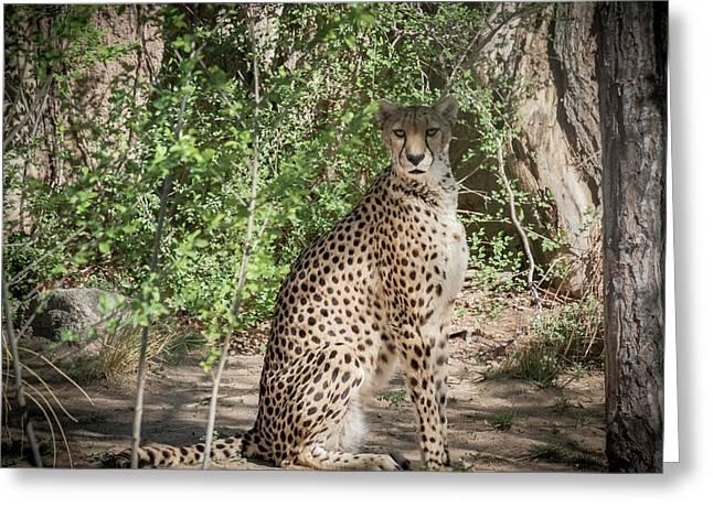 Cheetah Greeting Card by Mary Lee Dereske