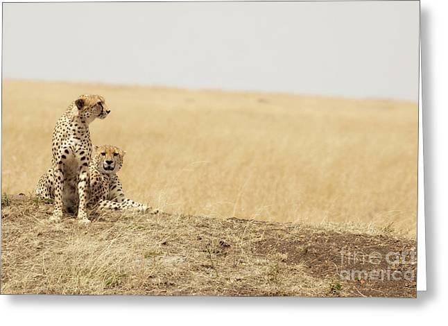 Cheetah Pair In The Masai Mara Greeting Card