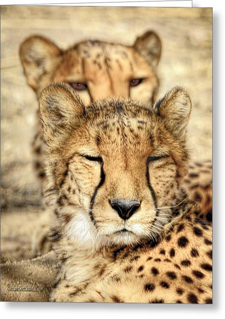 Cheetah Pair Greeting Card by LeeAnn McLaneGoetz McLaneGoetzStudioLLCcom