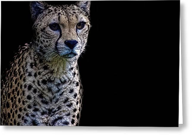 Cheetah Portrait Greeting Card by Martin Newman