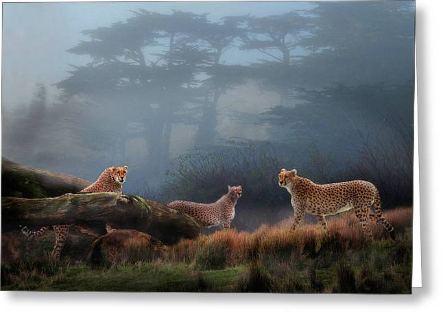 Cheetahs In The Mist Greeting Card