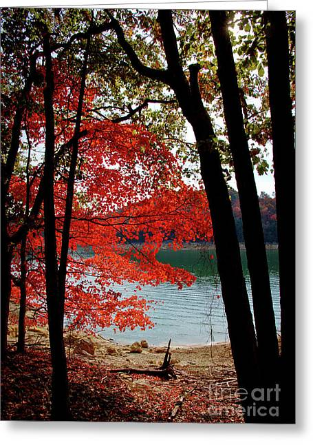Greeting Card featuring the photograph Cherokee Lake Color by Douglas Stucky