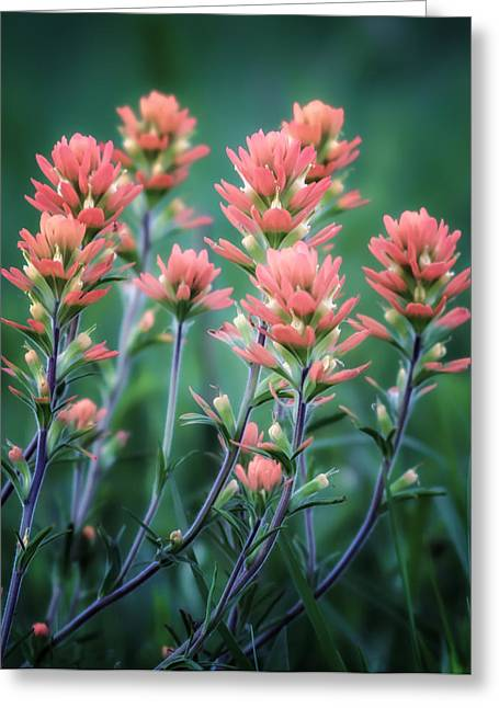 Cherokee Prairie Paintbrush Greeting Card