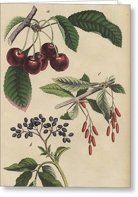 Cherries And Berries Greeting Card