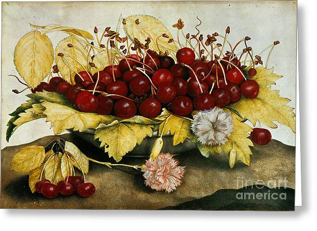 Cherries And Carnations Greeting Card
