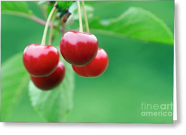 Cherries Greeting Card by Michal Boubin