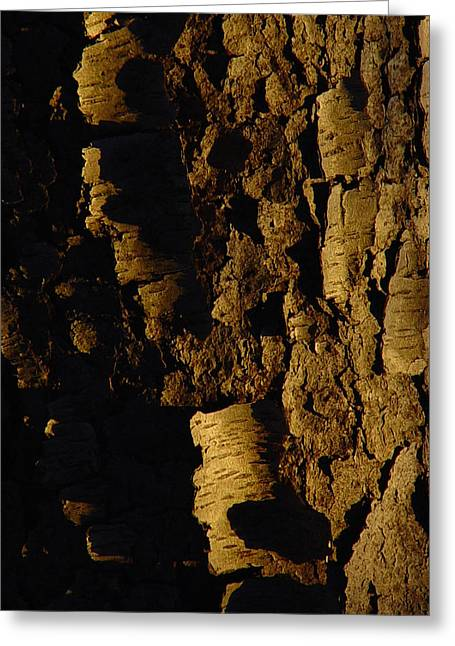 Cummington Greeting Cards - Cherry Bark Greeting Card by Rosemary Wessel