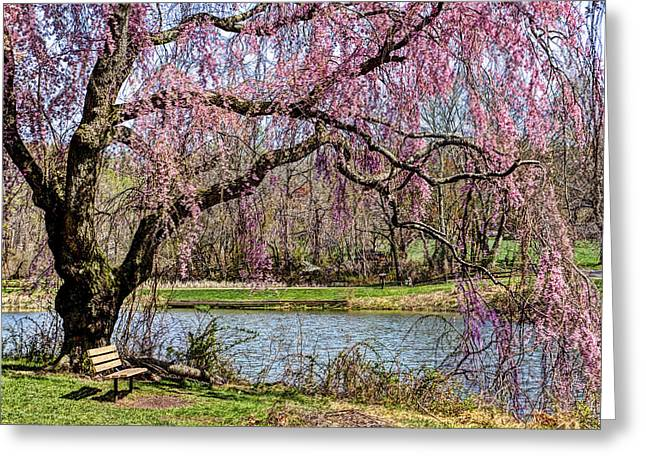 Cherry Blossom And Bench  Greeting Card by Geraldine Scull