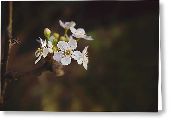 Cherry Blossom Greeting Card by April Reppucci