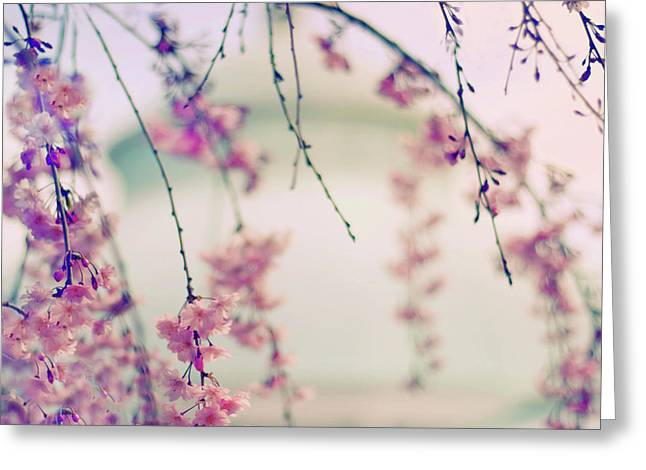 Cherry Blossom Breeze Greeting Card by Jessica Jenney