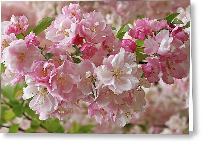 Greeting Card featuring the photograph Cherry Blossom Closeup by Gill Billington
