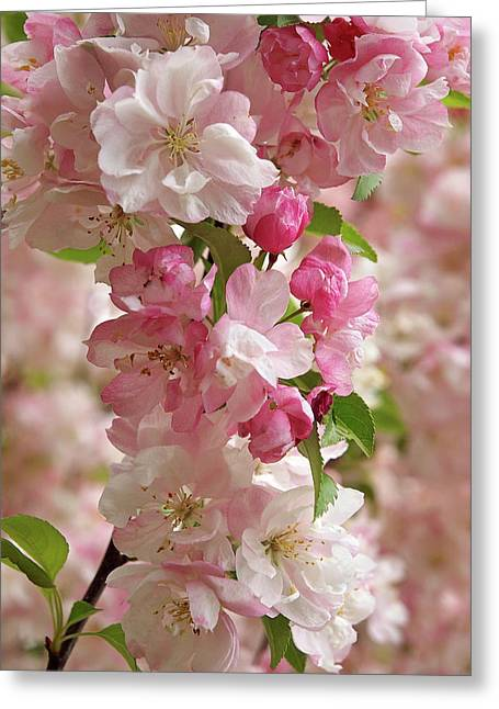Greeting Card featuring the photograph Cherry Blossom Closeup Vertical by Gill Billington