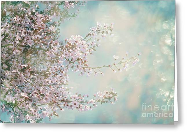 Cherry Blossom Dreams Greeting Card by Linda Lees