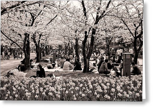 Cherry Blossom Festival Greeting Card