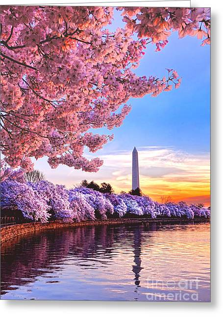 Cherry Blossom Festival  Greeting Card