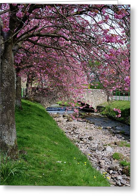 Greeting Card featuring the photograph Cherry Blossom In Central Scotland by Jeremy Lavender Photography