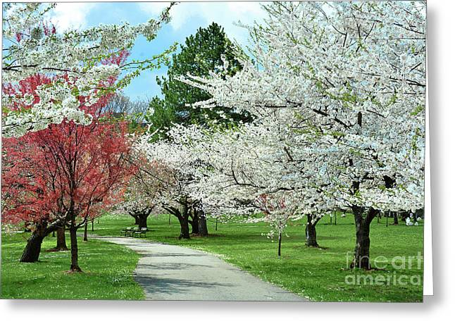 Landscaping Trees Regina : Cherry blossom landscape greeting card by regina geoghan