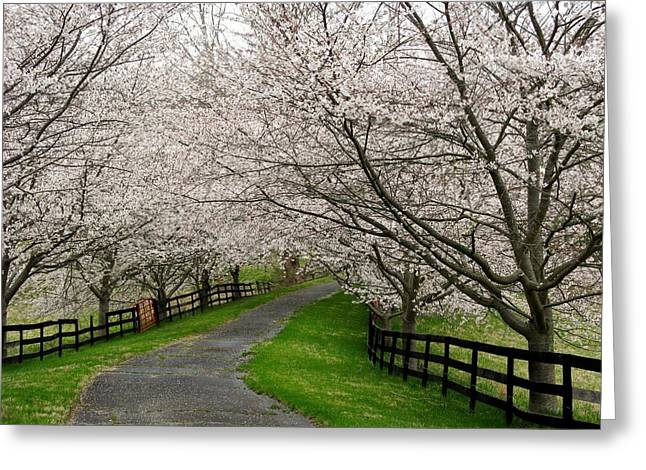Cherry Blossom Lane Greeting Card