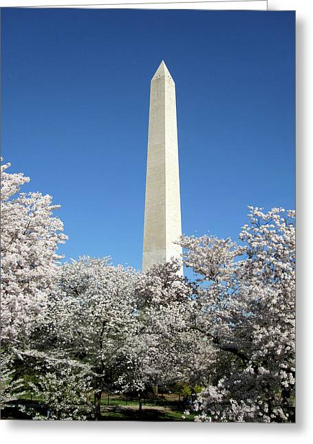 Cherry Blossom Greeting Card by Marie Taylor-Morrison