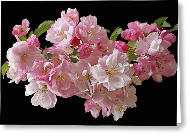 Cherry Blossom On Black Greeting Card by Gill Billington