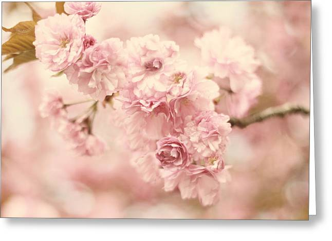 Cherry Blossom Petals Greeting Card by Jessica Jenney