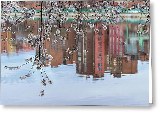Cherry Blossom Reflections Greeting Card