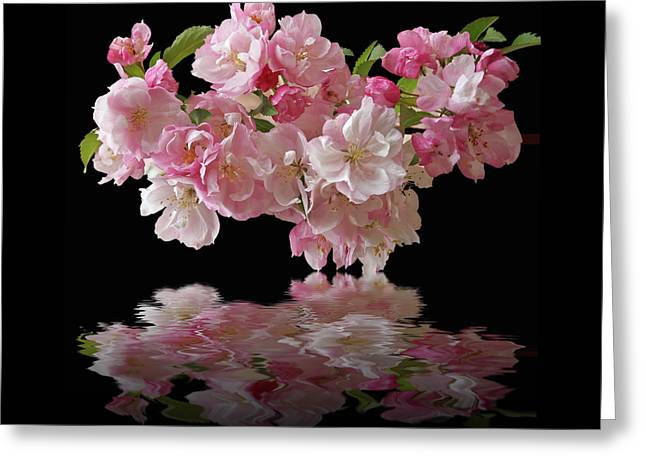 Cherry Blossom Reflections On Black Greeting Card by Gill Billington