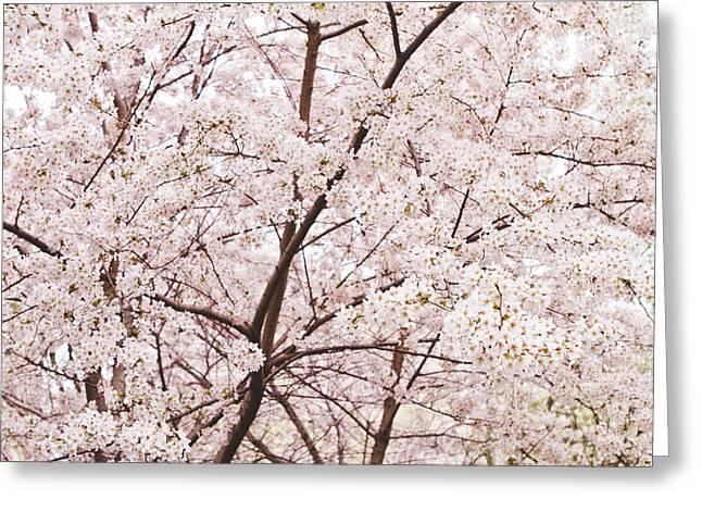 Cherry Blossom Spring Greeting Card by Ariane Moshayedi