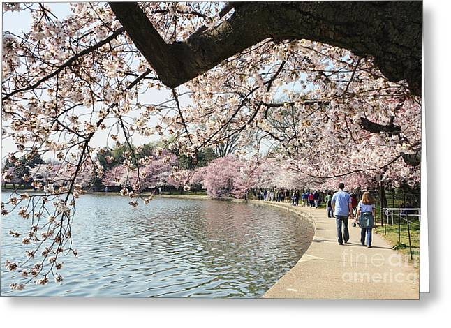 Cherry Blossom Stroll Around The Tidal Basin Greeting Card