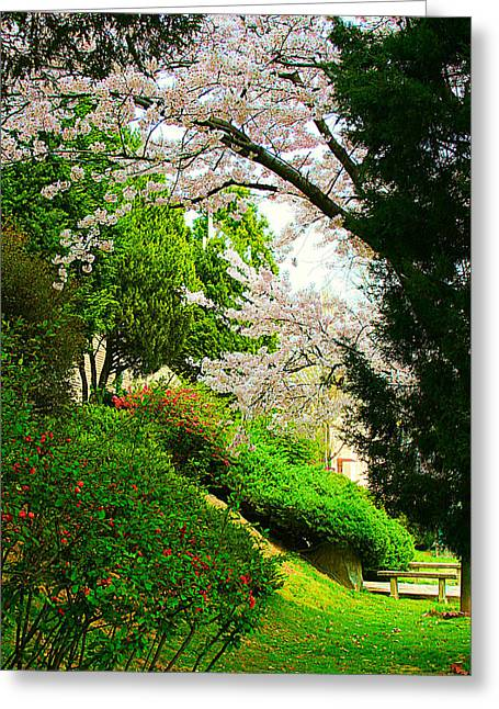 Cherry Blossom Time Greeting Card by Michael C Crane