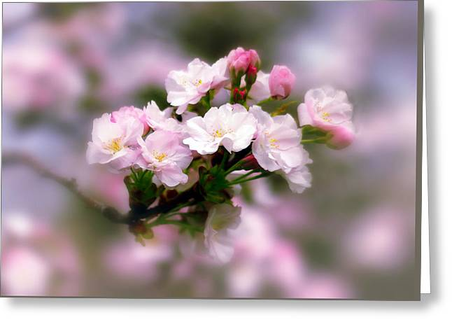 Cherry Blossom Whispers Greeting Card by Jessica Jenney