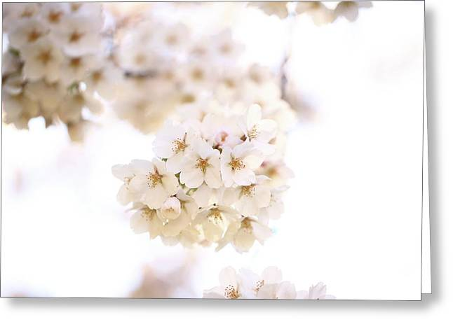 Greeting Card featuring the photograph Cherry Blossoms - A by Anthony Rego