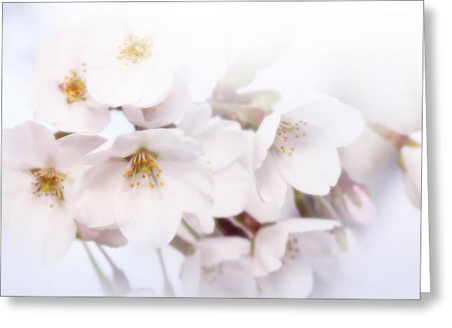 Greeting Card featuring the photograph Cherry Blossoms - C by Anthony Rego