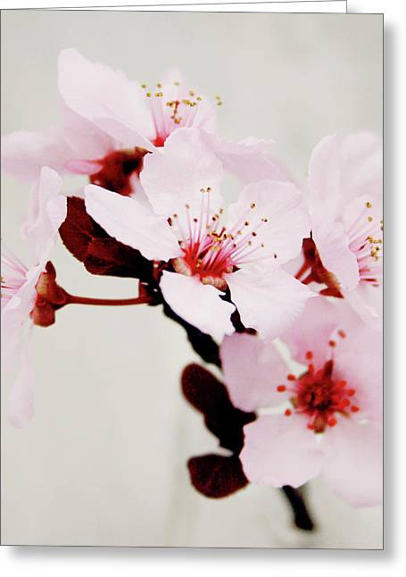 Greeting Card featuring the mixed media Cherry Blossoms 1- Art By Linda Woods by Linda Woods