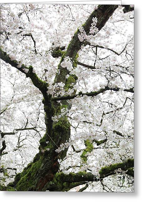 Cherry Blossoms 119 Greeting Card