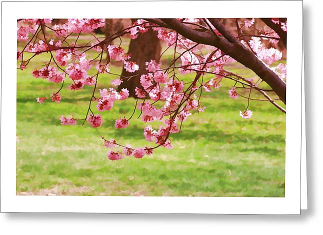 Cherry Blossom Trees Of Branch Brook Park 4 Greeting Card by Allen Beatty