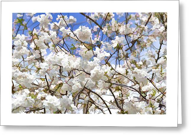 Cherry Blossom Trees Of Branch Brook Park 5 Greeting Card by Allen Beatty