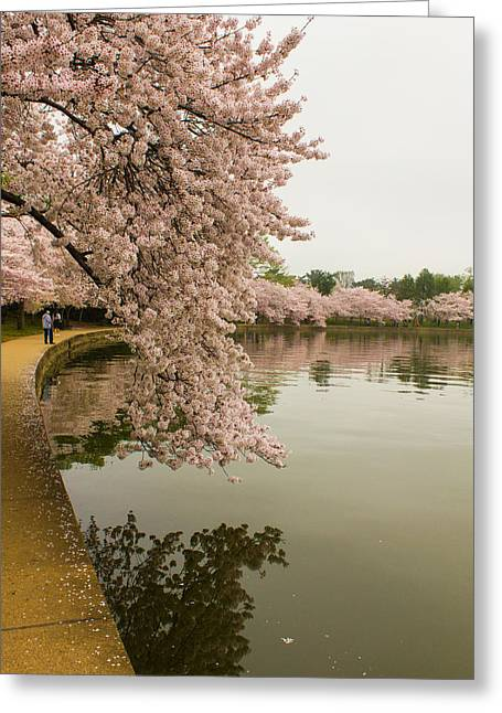 Cherry Blossoms Along The Tidal Basin 8x10 Greeting Card
