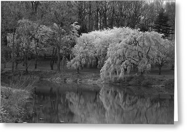 Cherry Blossoms And The Pond - Holmdel Park Greeting Card by Angie Tirado