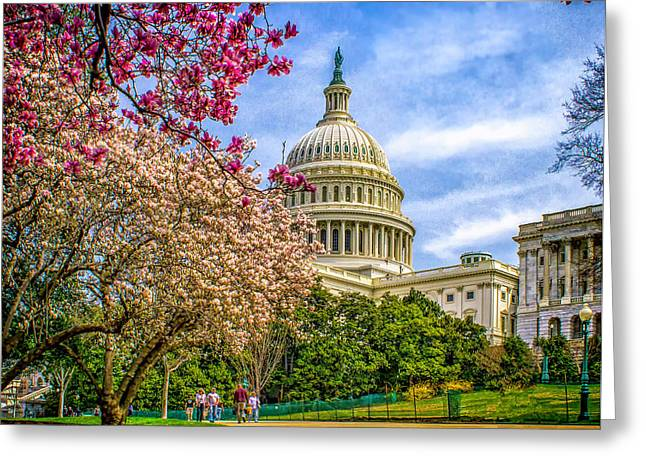 Cherry Blossoms At The Capitol Greeting Card by Nick Zelinsky