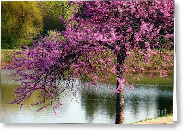 Cherry Blossoms By The Pond Greeting Card by Sue Melvin