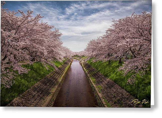 Greeting Card featuring the photograph Cherry Blossoms In Nara by Rikk Flohr