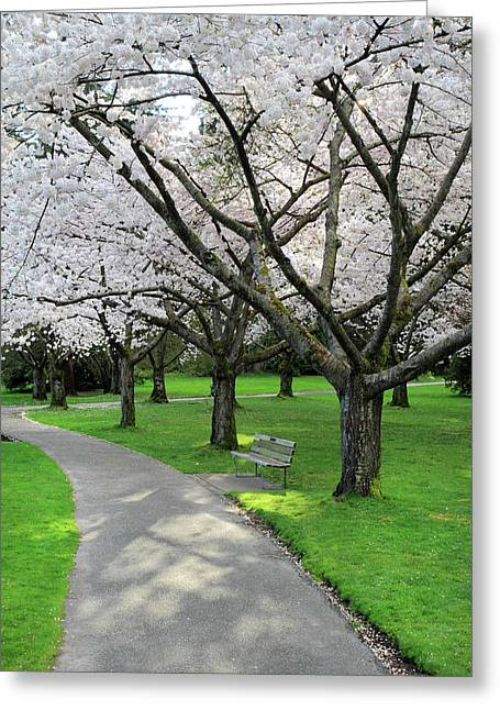 Cherry Blossoms In Stanley Park Vancouver Greeting Card by Pierre Leclerc Photography