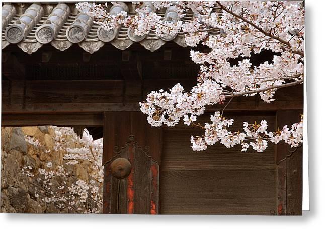 Cherry Blossoms Greeting Card by Joe Bonita