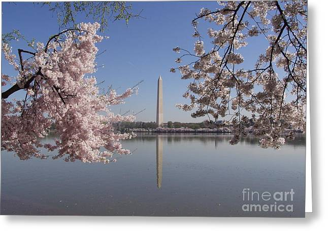 Cherry Blossoms Monument Greeting Card by April Sims