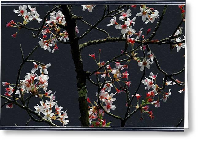 Cherry Blossoms On Dark Bkgrd Greeting Card