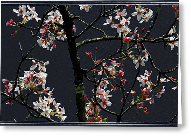 Cherry Blossoms On Dark Bkgrd Greeting Card