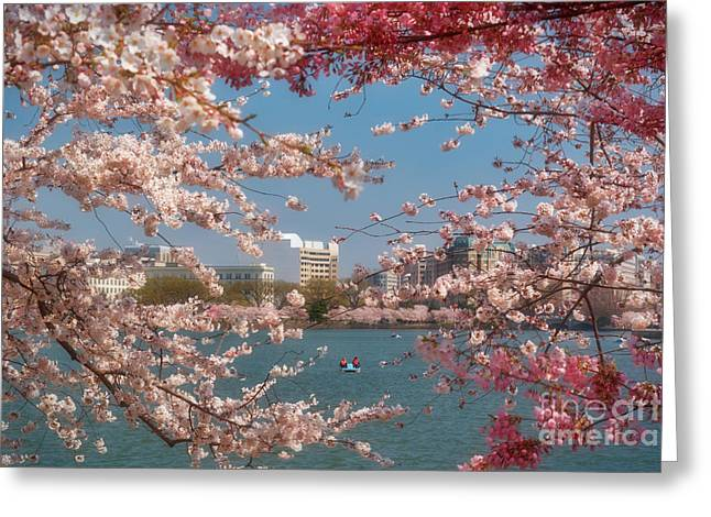 Cherry Blossoms On The Edge Of The Tidal Basin Three Greeting Card by Susan Isakson
